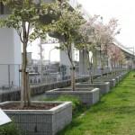 猪名川土手の桜並木