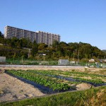 市民農園(吉田町)