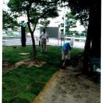 青々とした芝生の植え付け(6月)